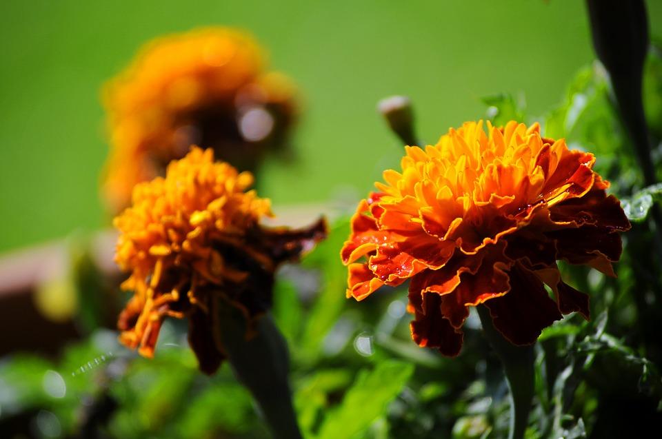 Een kleurrijke tuin met fleurige planten