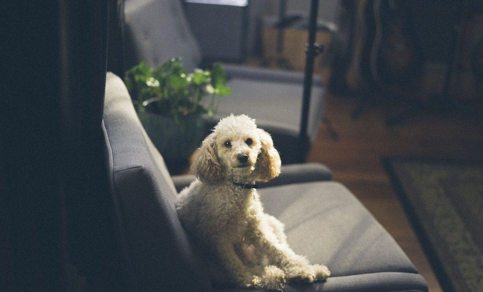 Fijne plek voor je hond in huis