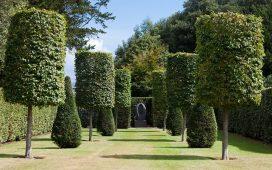 bomen in je tuin