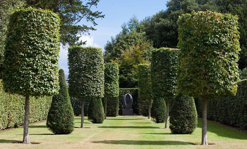 Bomen In Tuin : Bomen in je tuin woonhint