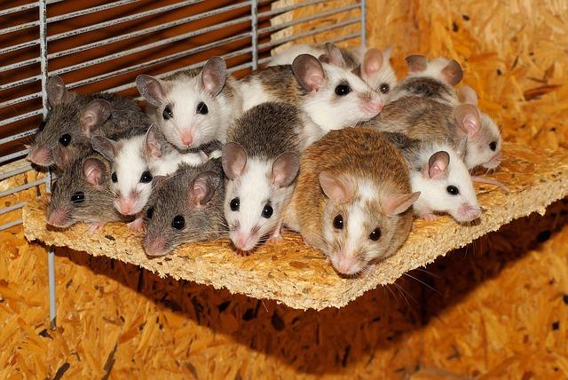 schade huizen muis