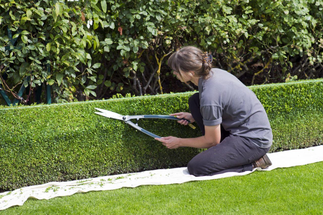 onderhoudsarme tuin hovenier