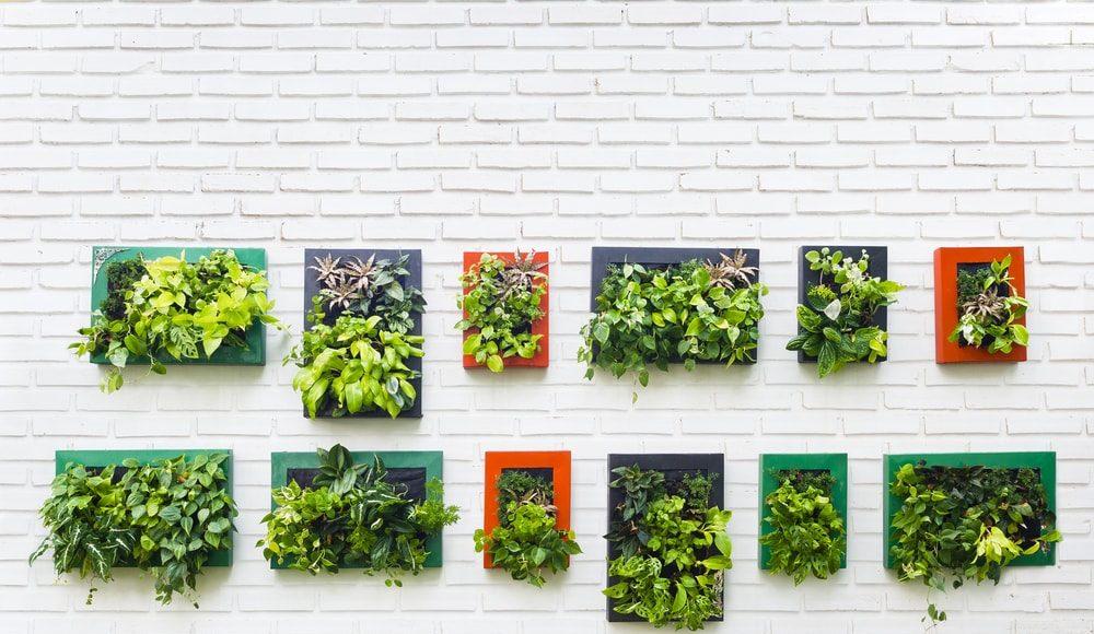 4 tips om meer groen in huis te halen
