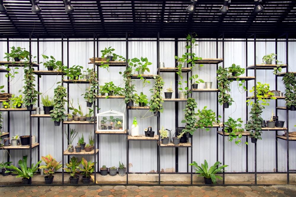 Héél veel planten, het mag weer!