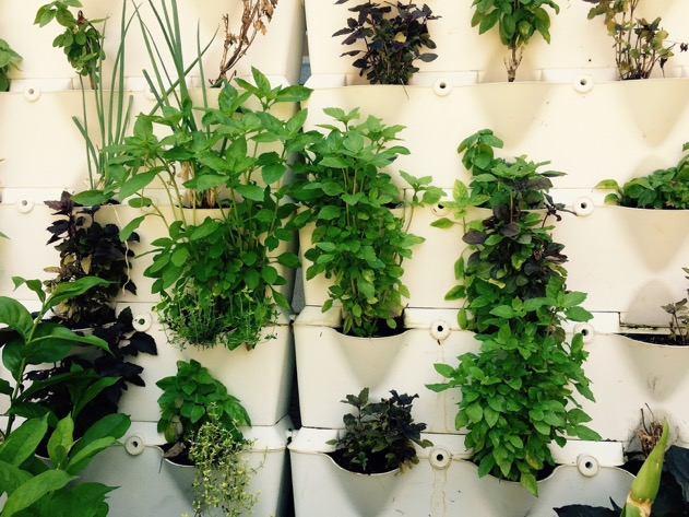 Tuinieren zonder tuin