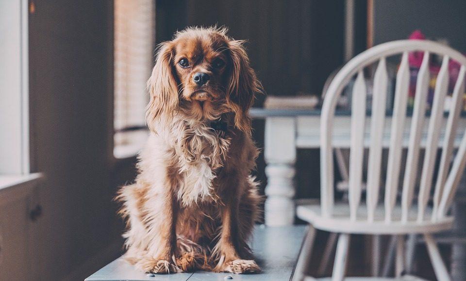 Heeft uw hond oorontsteking?