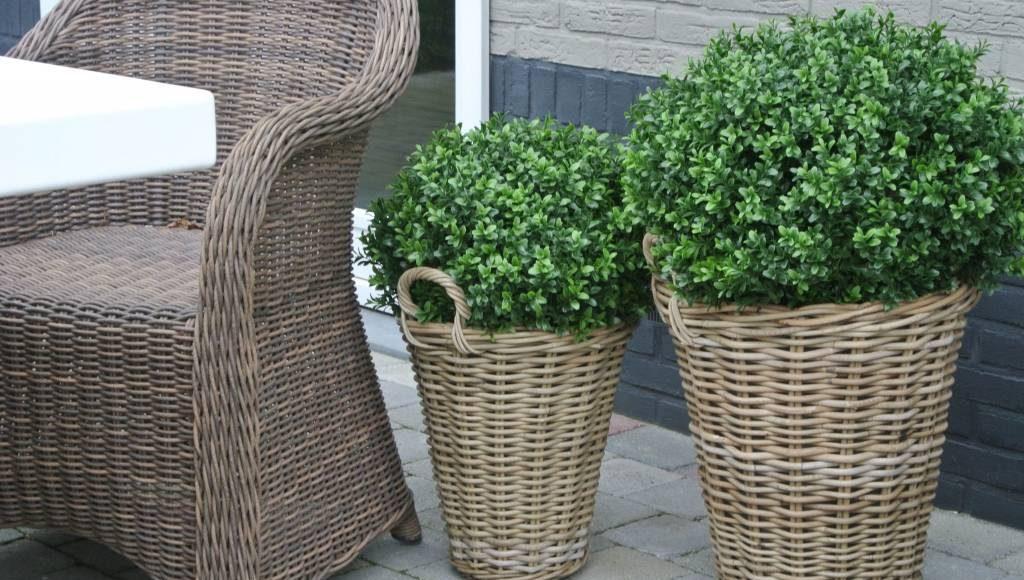 kunstplanten in huis of tuin