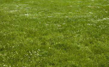 De grasmaaier VS de verticuteermachine